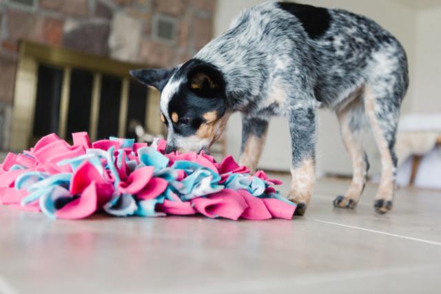 dog, training, snufflemat,